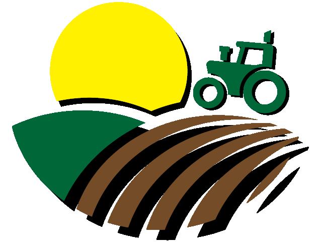 Azienda Agricola Natura Salentina – Vendita diretta erbe aromatiche: rucola, basilico